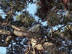 Wild New Zealand Parrot: Devonport, New Zealand