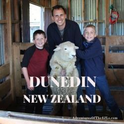 P_ 201804 New Zealand Dunedin